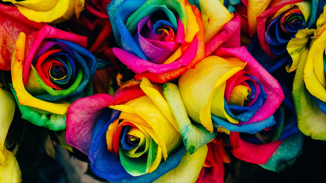 Beautiful Rose Flowers Images 12