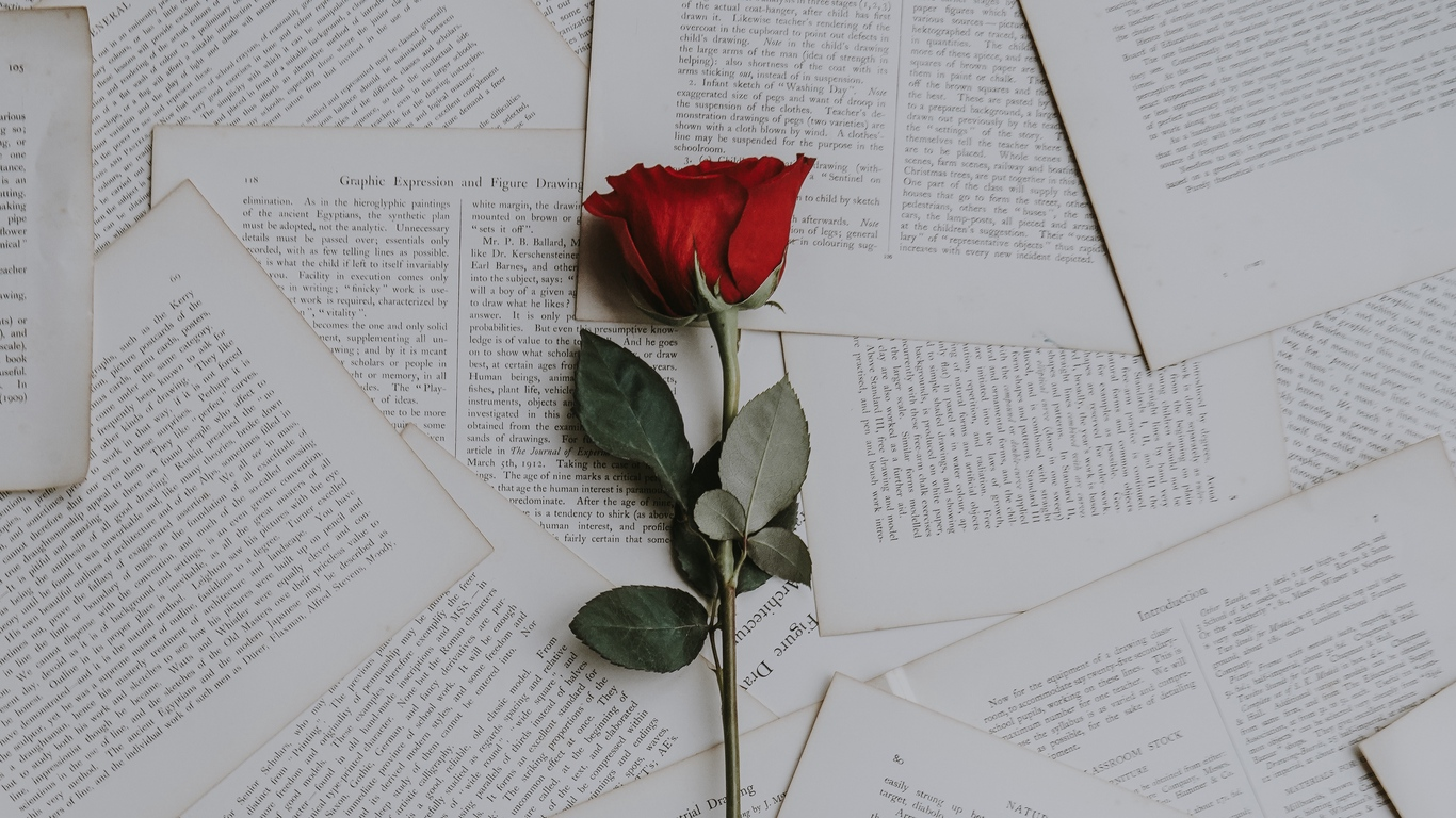 Love rose flower photos images free download 9