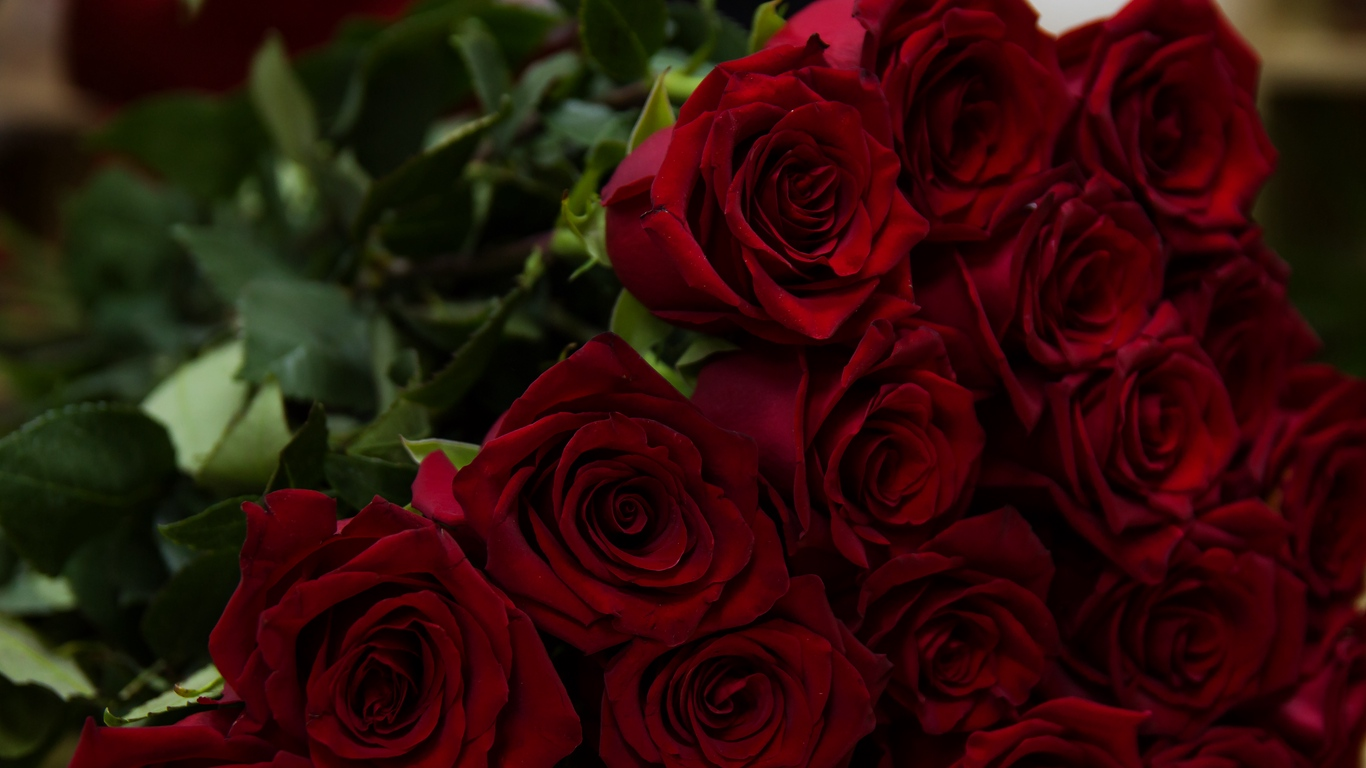 beautiful rose love images for mobile 5