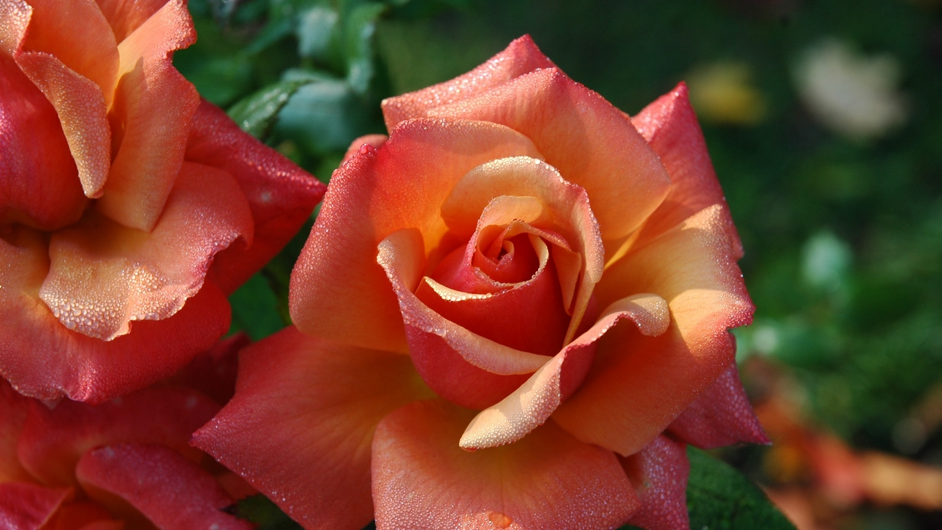 hd flowers pics for love wishes 2