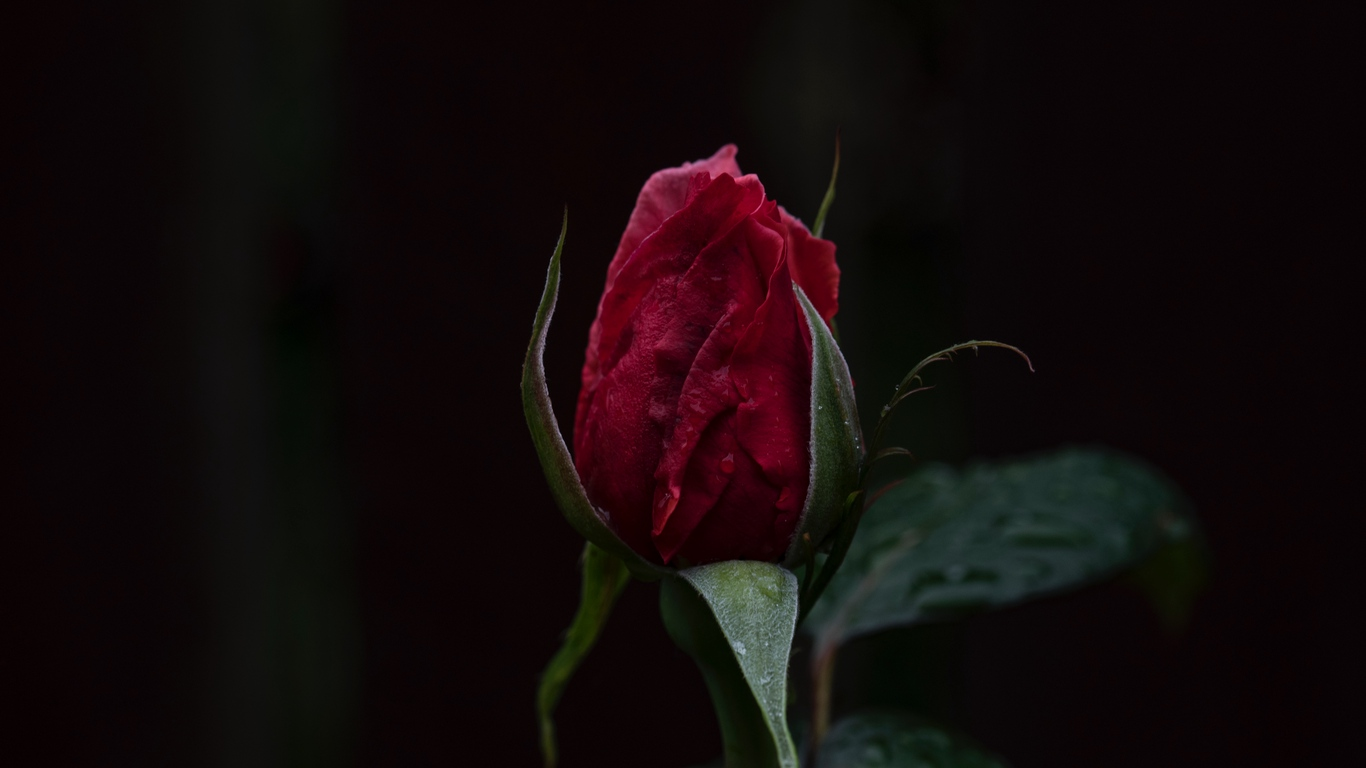 hd flowers pics for love wishes 8