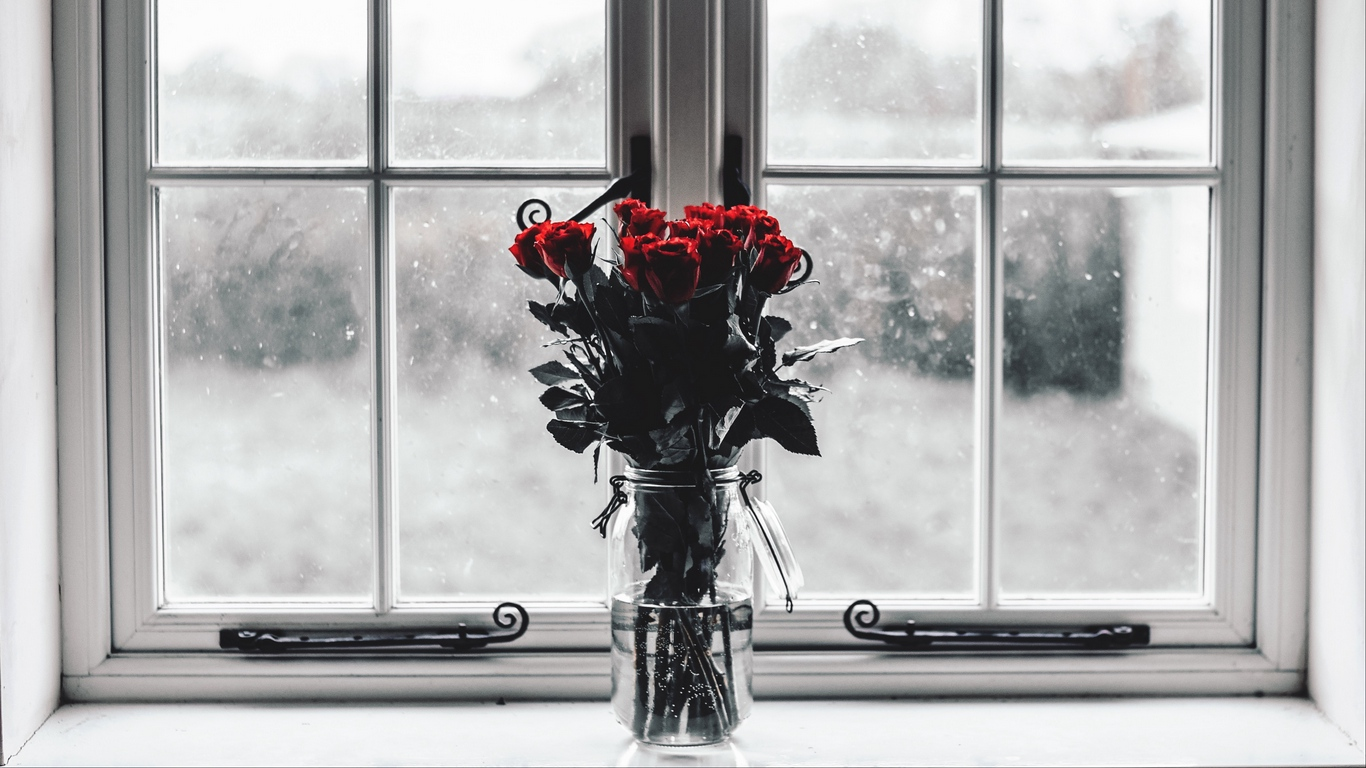 red rose love images hd download 1
