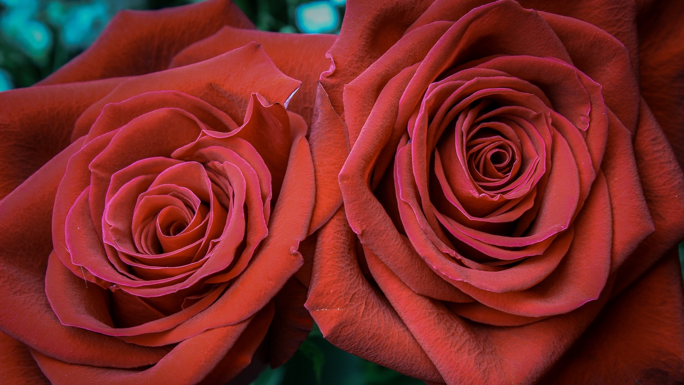 rose images with love for you 2