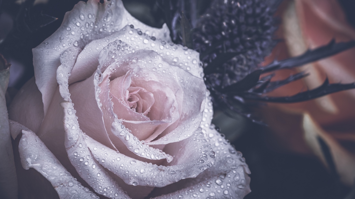 rose images with love for you 3