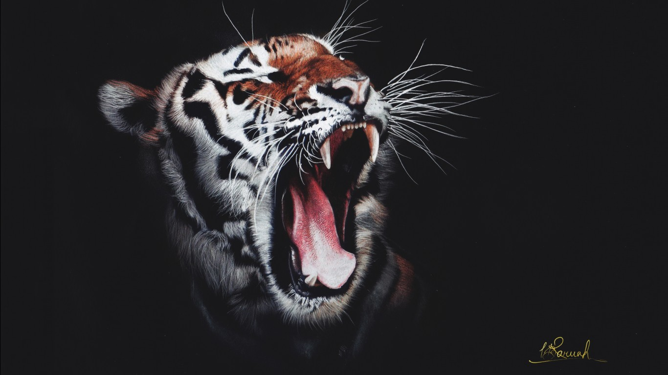 Bengal tiger hd images wallpapers 2