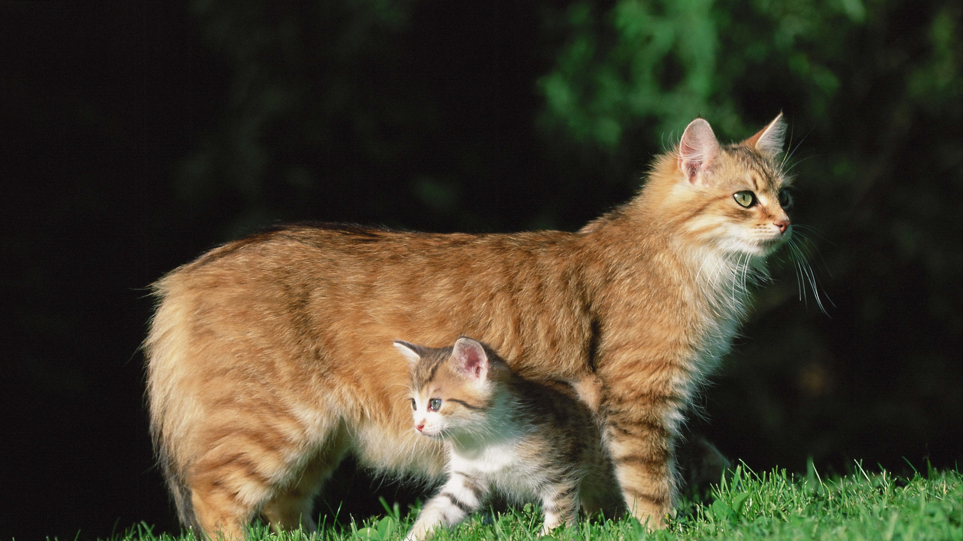 Cute Cat images for Mobile 1