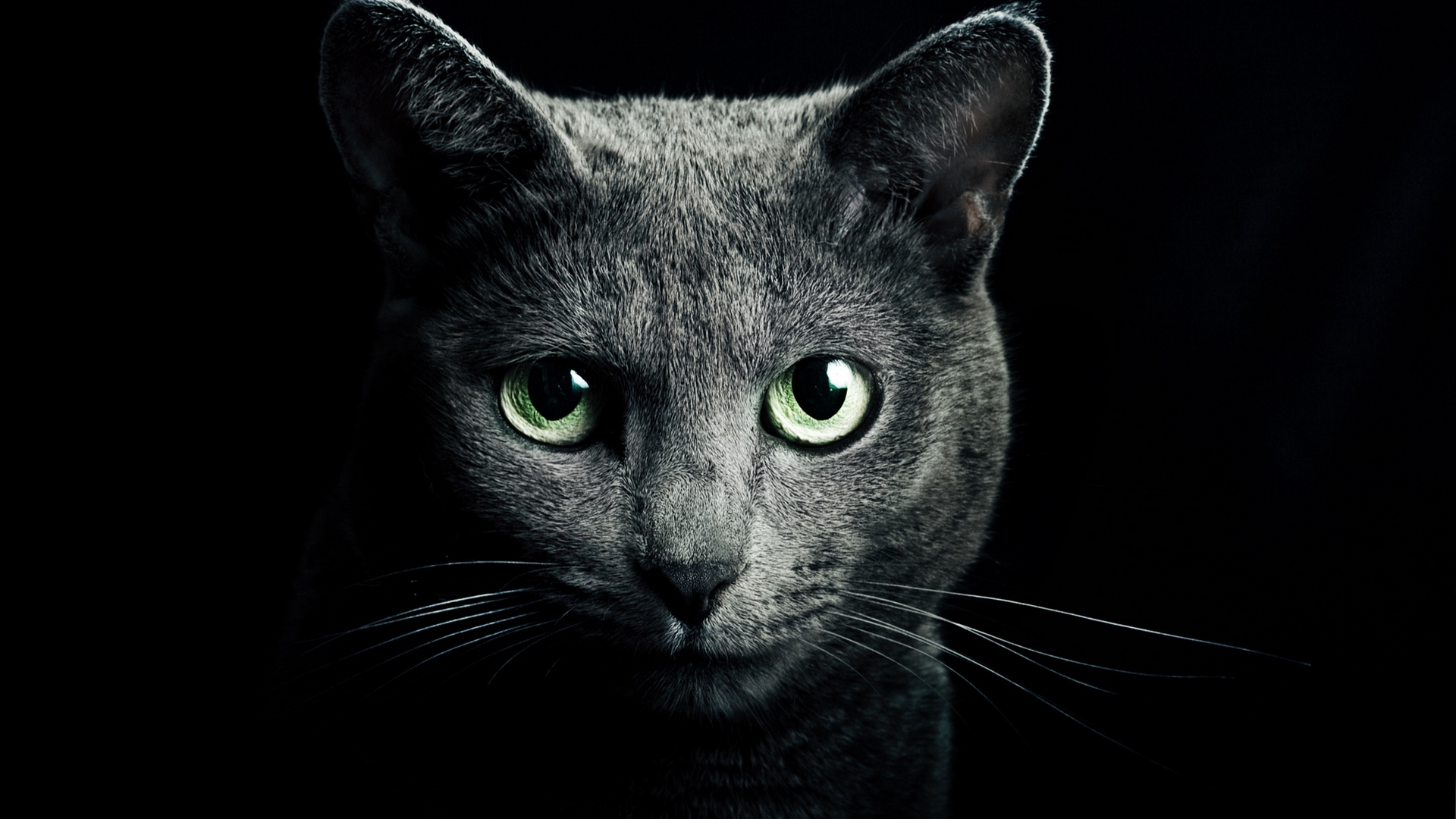 Cute Cat images for Mobile 3