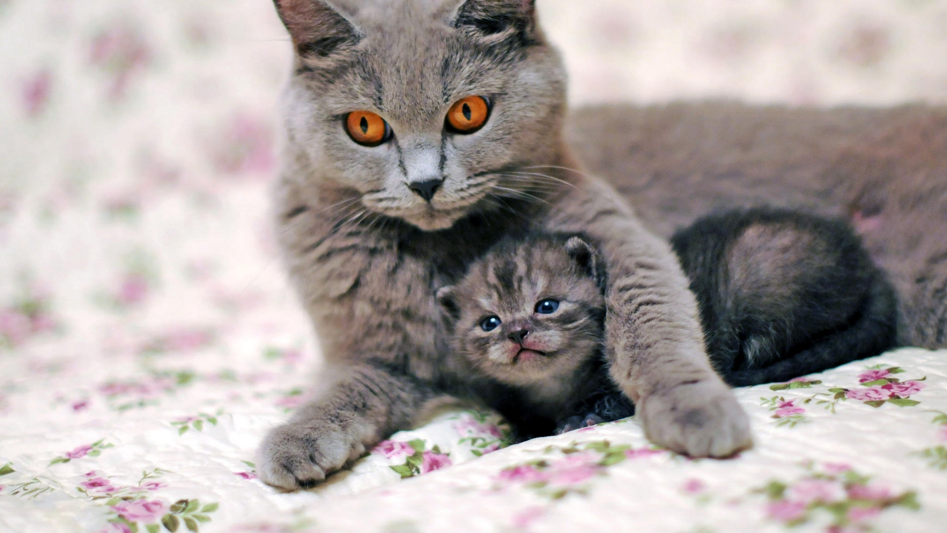 Cute Cat images for Mobile 7