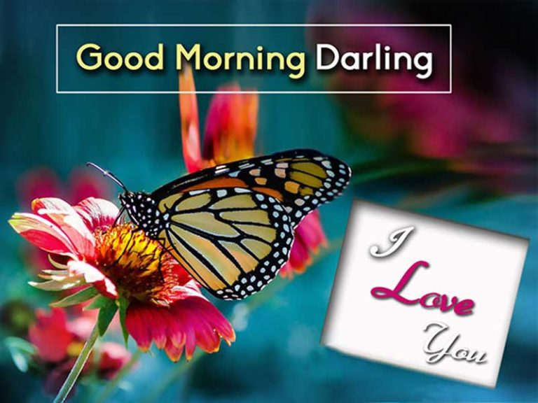 Good Morning Wishes photos 8