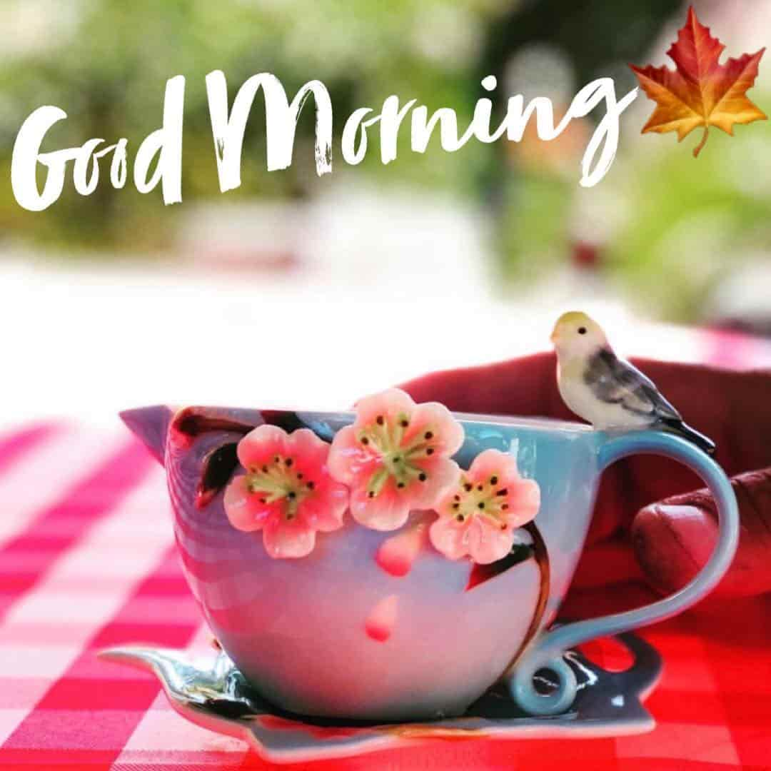 Good Morning quotes images for freinds 1