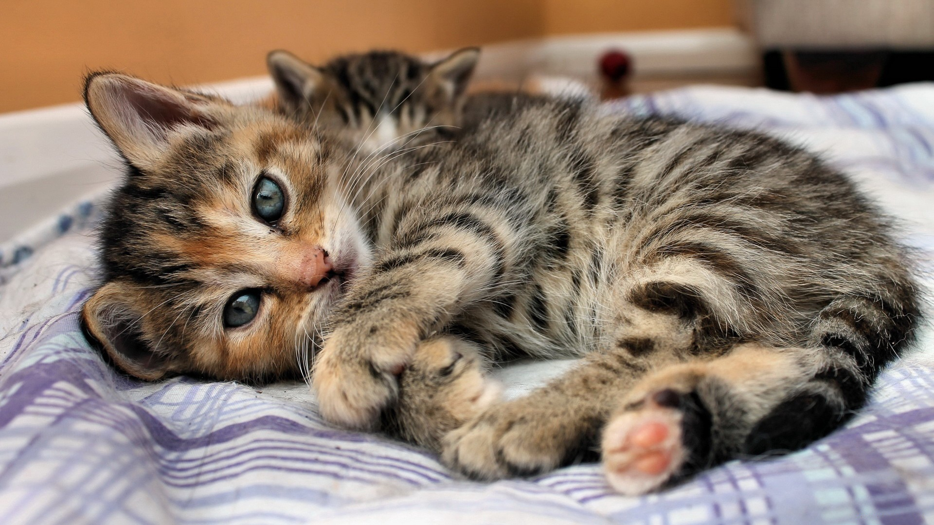 baby cat backgrounds for mobile 2