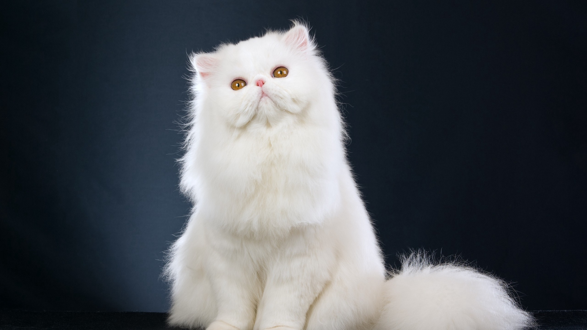 cute cat photos hd for mobile 1