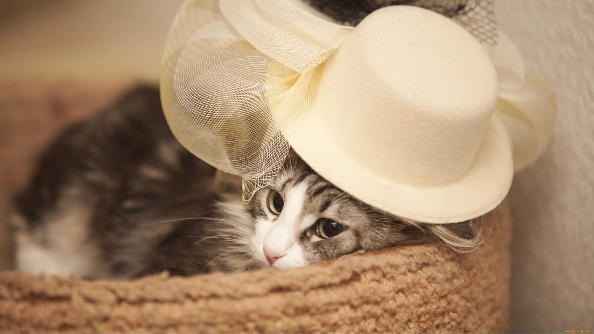 cute cat photos hd for mobile 2