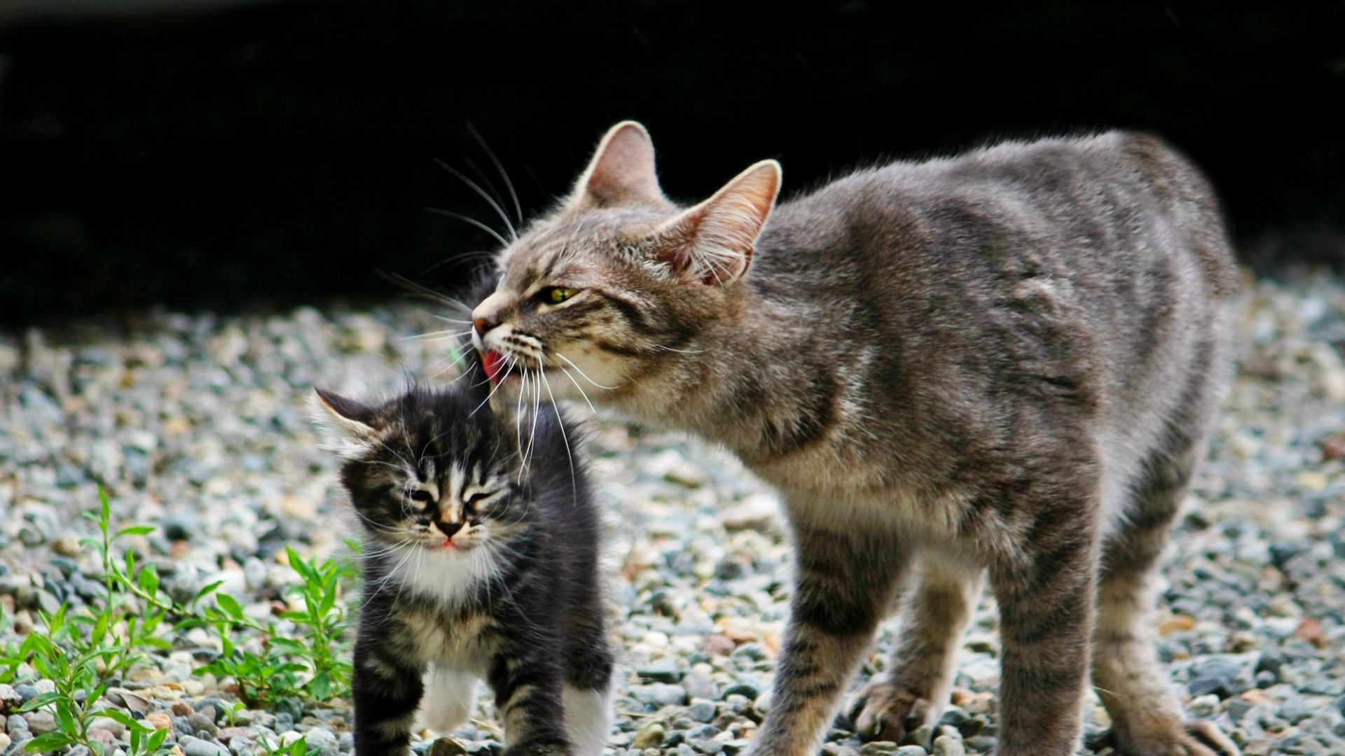 cute cat photos hd for mobile 4