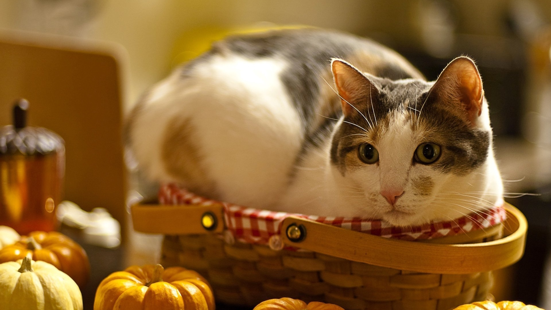 cute cat photos hd for mobile 5