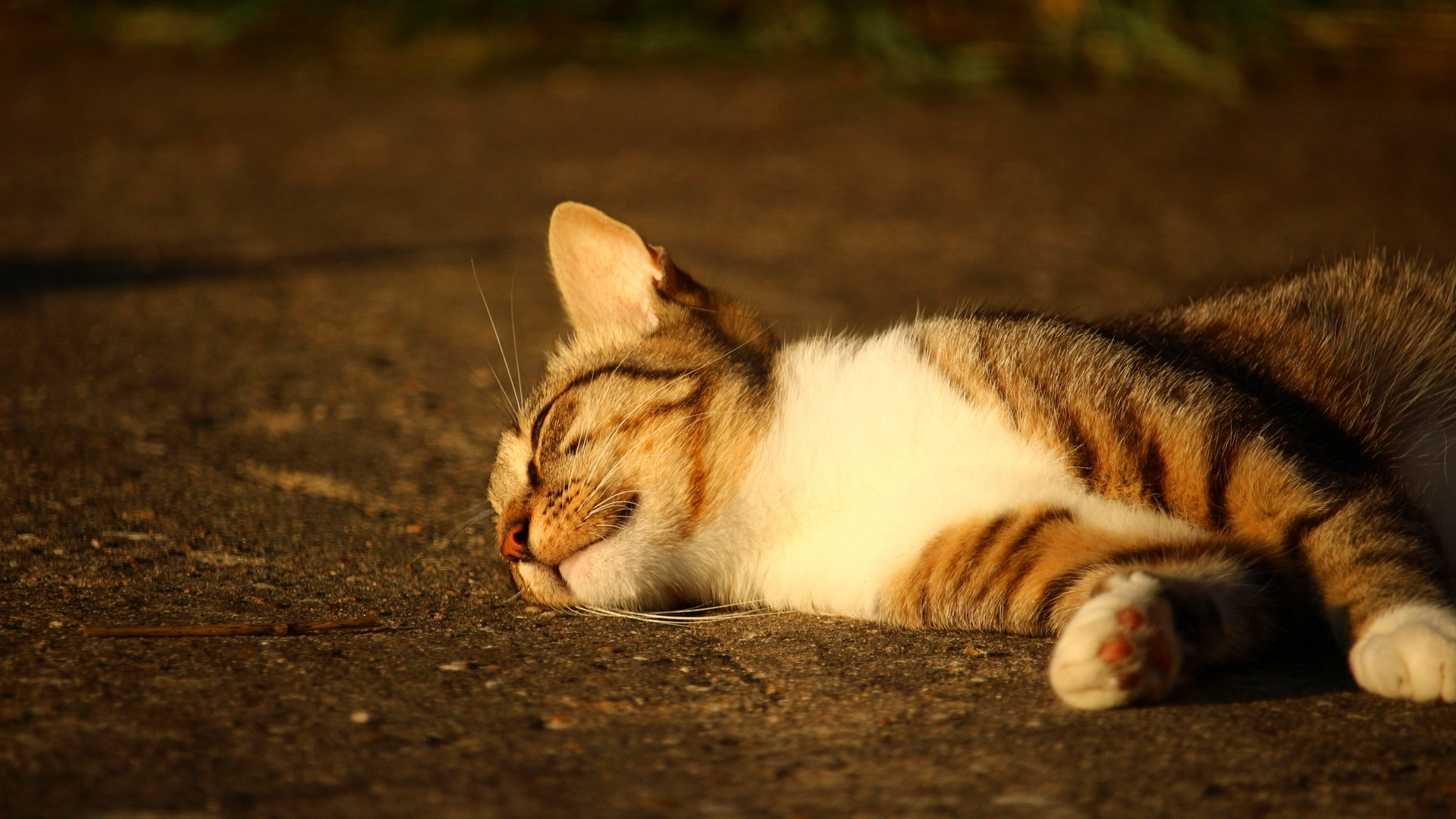 cute cat photos hd for mobile 6