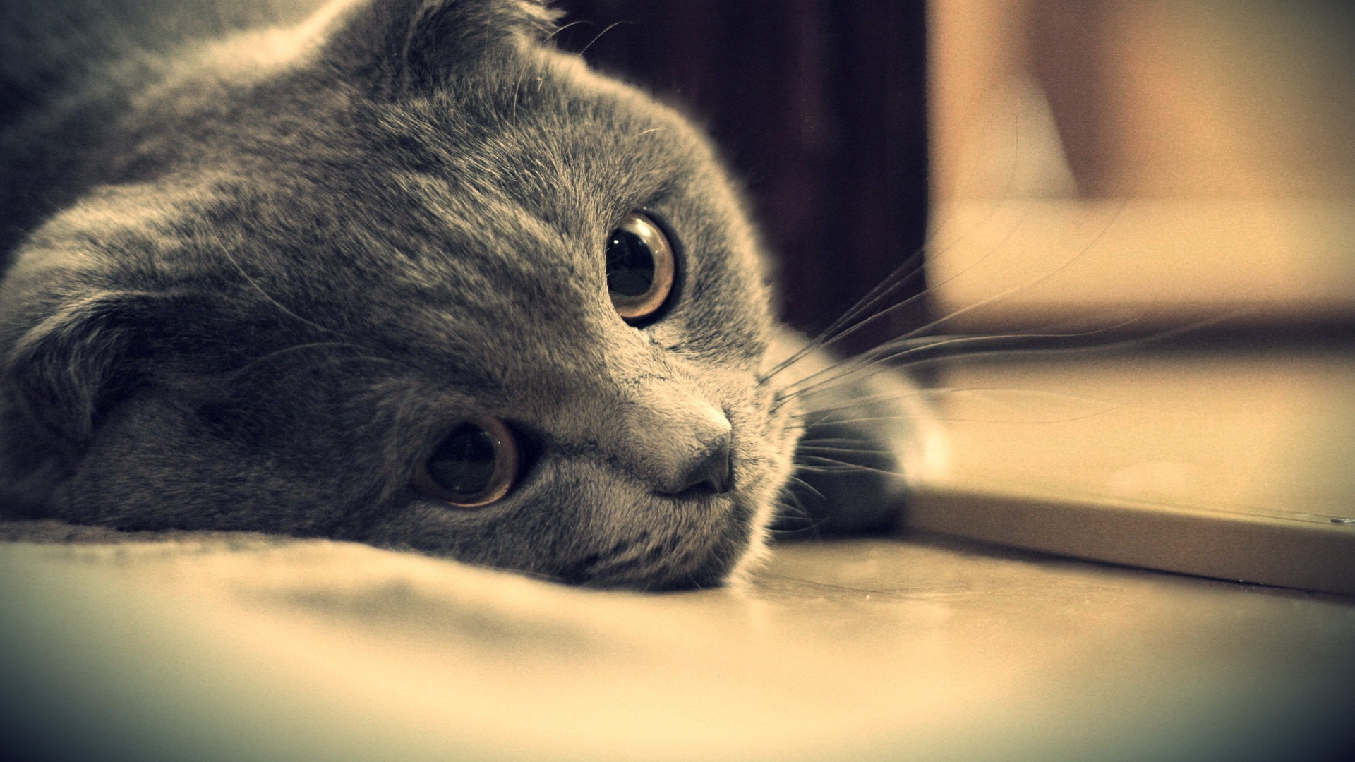 cute kitten wallpapers pictures hd 4
