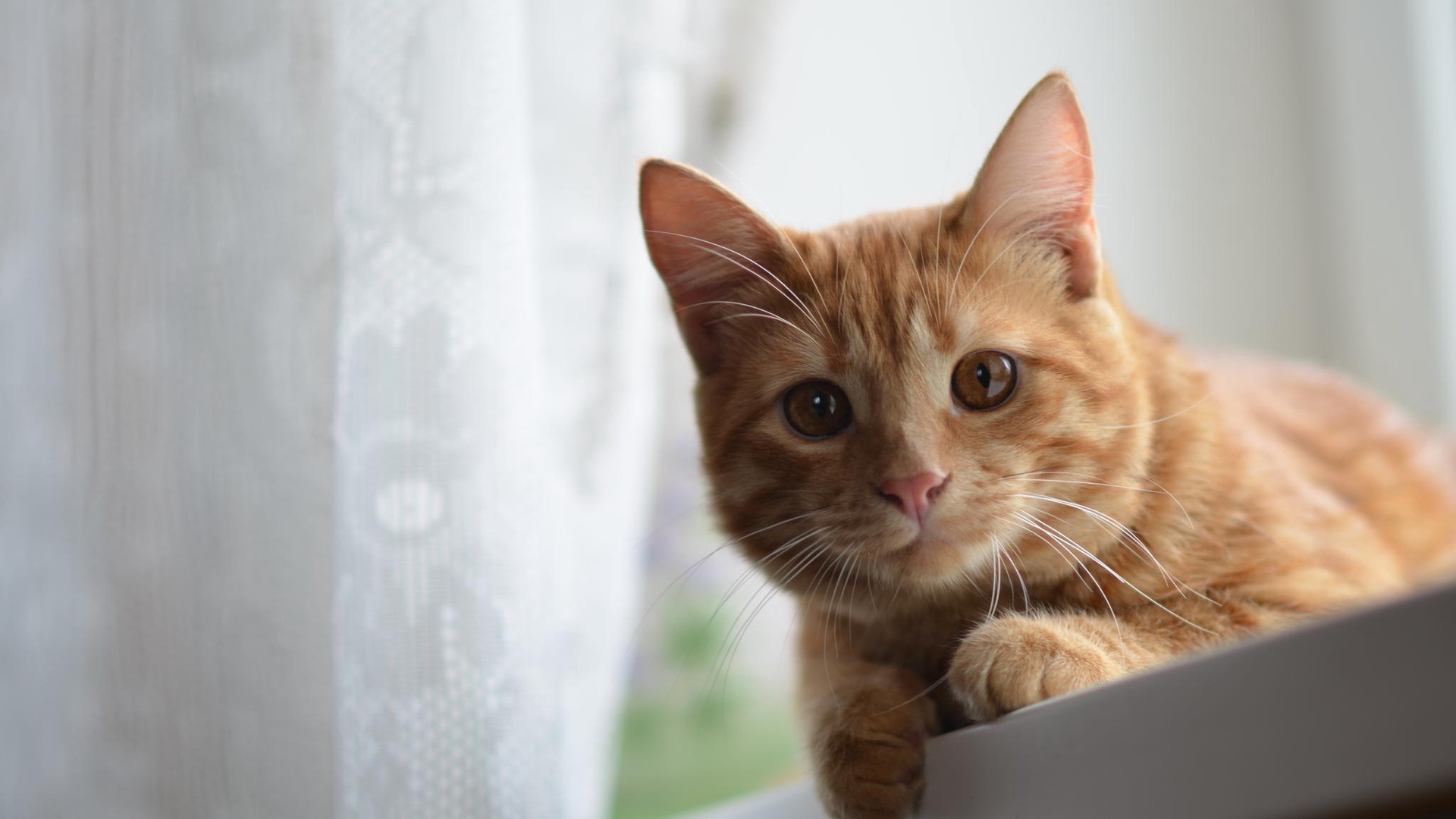 cute kitten wallpapers pictures hd 5