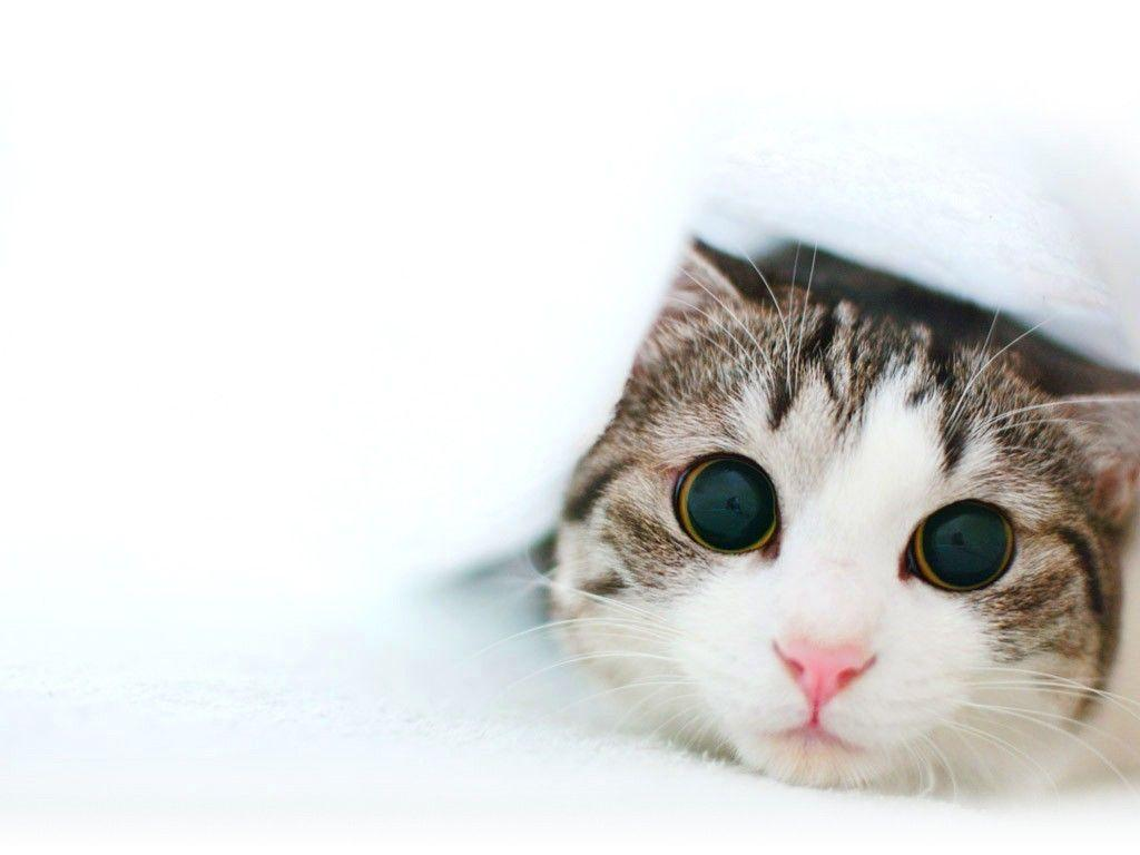 hd cat images free download 1
