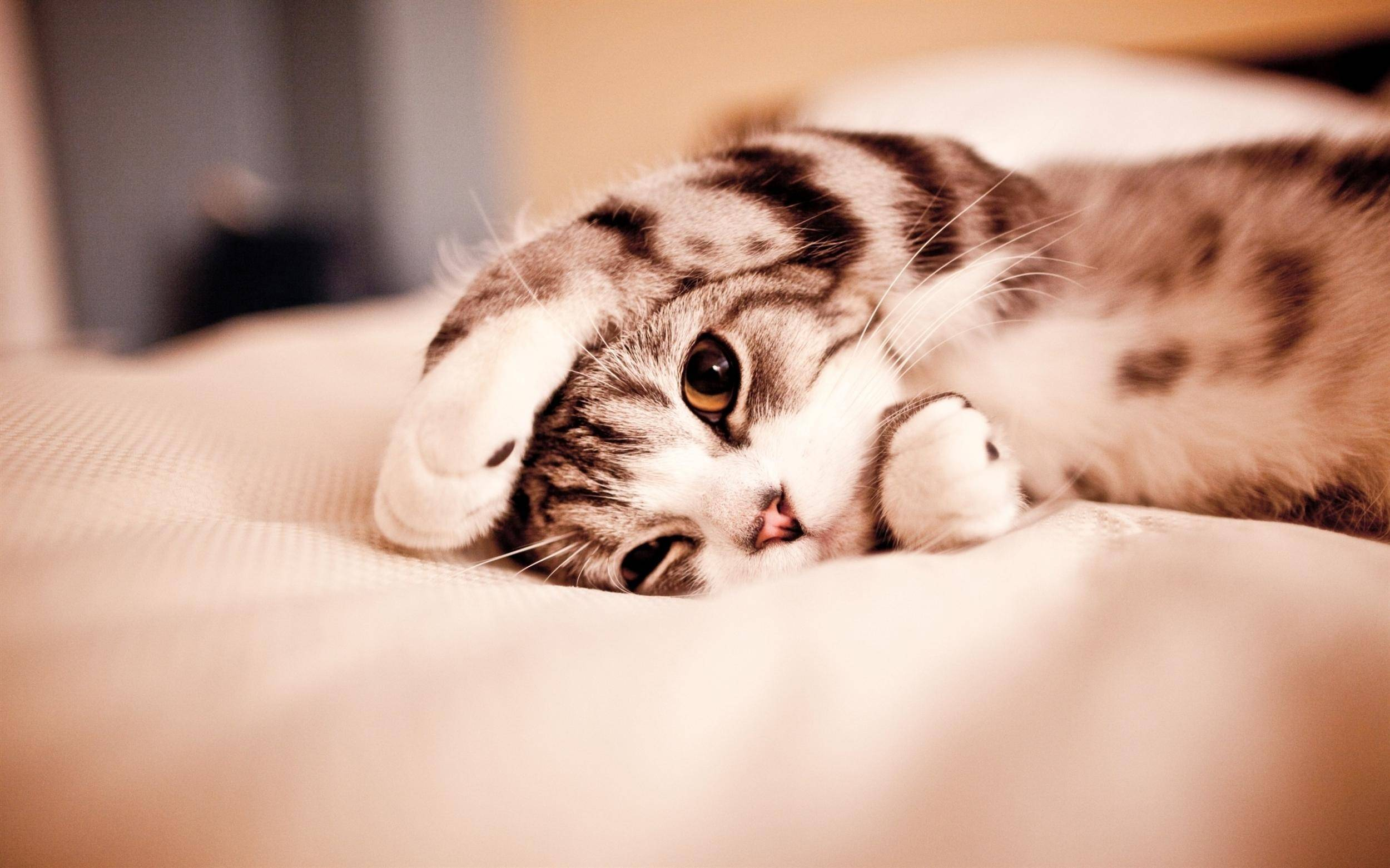 Adorable Cat Photos Hd Cute Cats Pictures Free Art