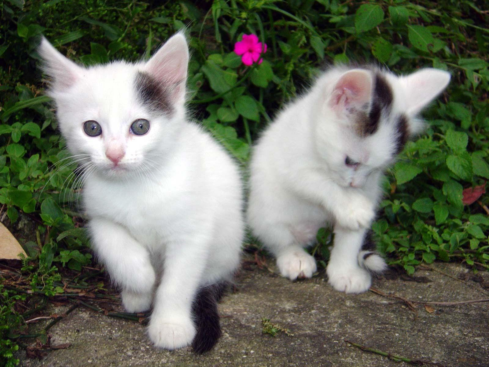 Adorable cat photos hd, Cute cats pictures