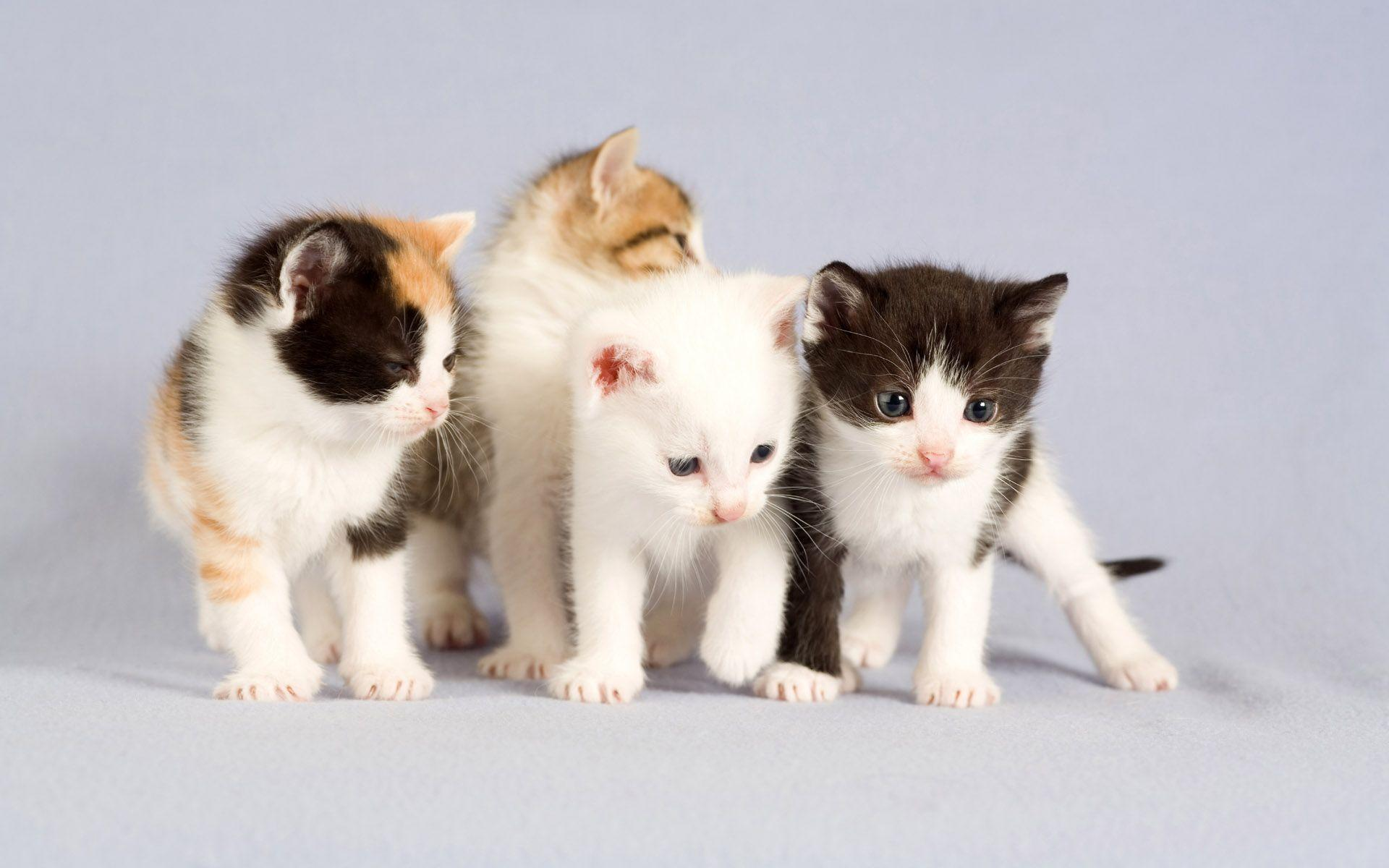 hd cat images free download 4