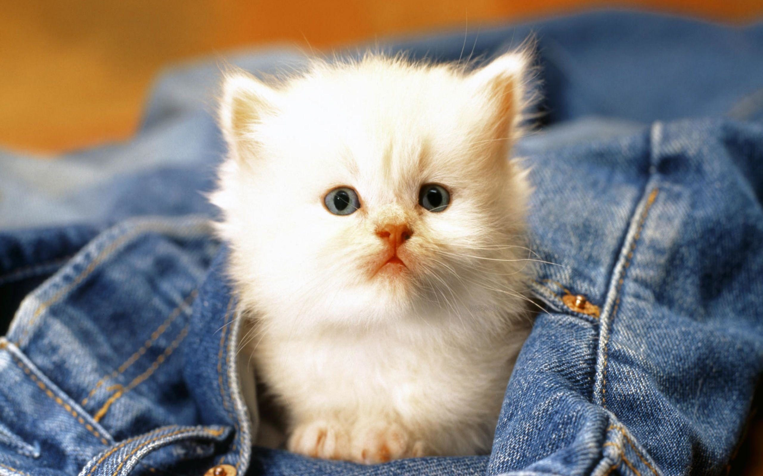 hd cat images free download 5