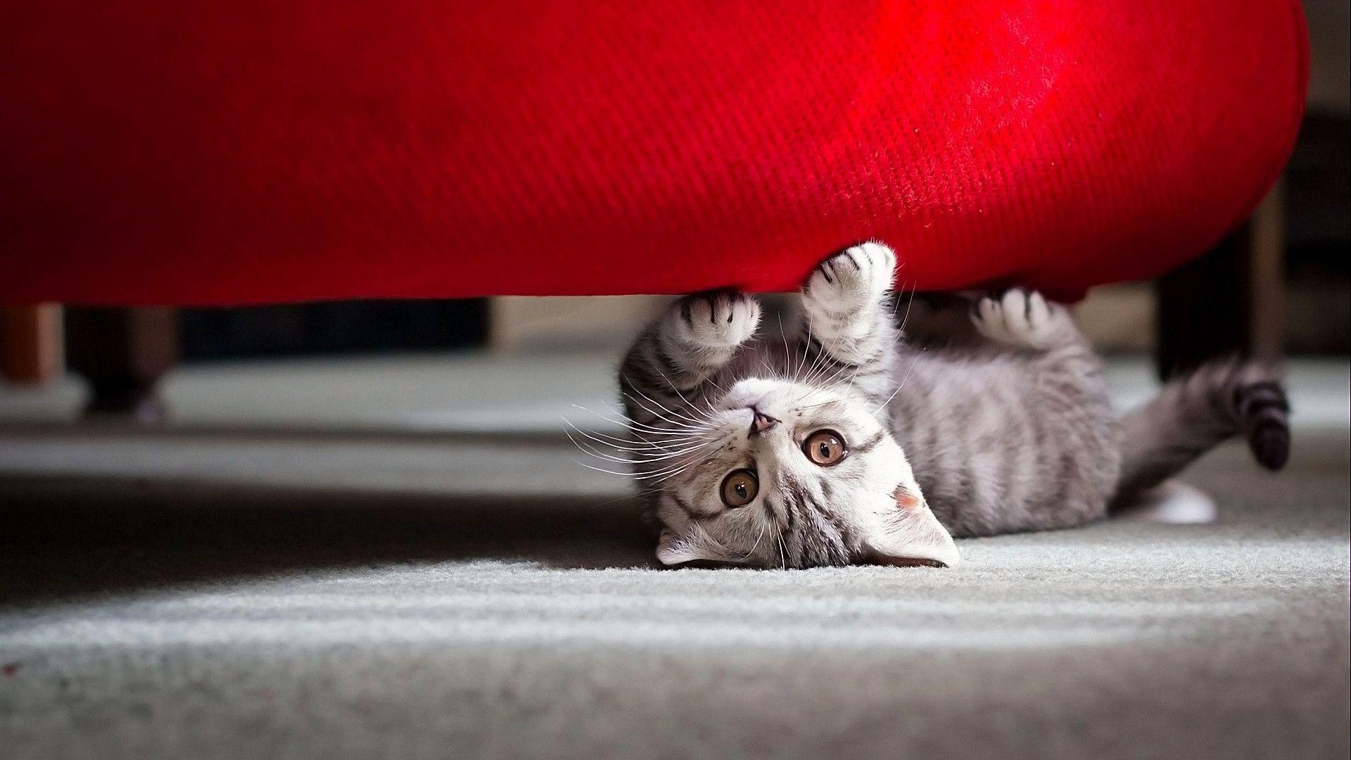 hd cat images free download 6